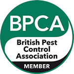 British pest control association wasp control  and removal service