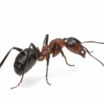 ant control  and treatment