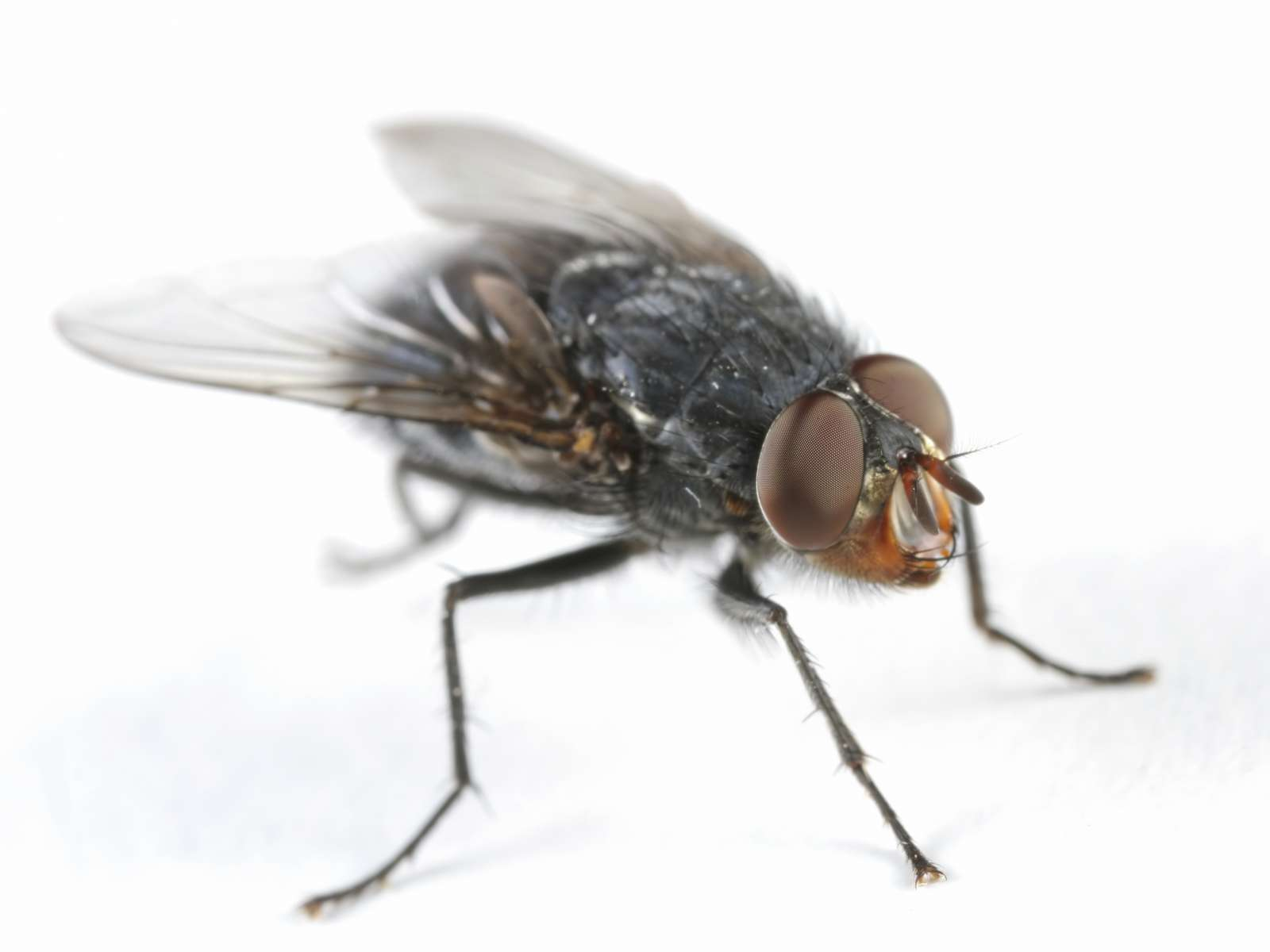 fly removal  and treatmet