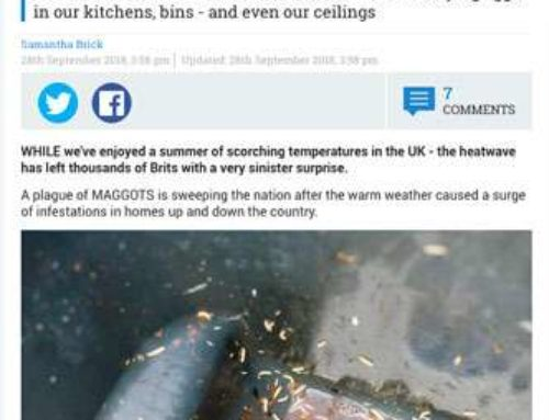 Summer heatwave and cheap rat poison has sparked a plague of MAGGOTS in the UK