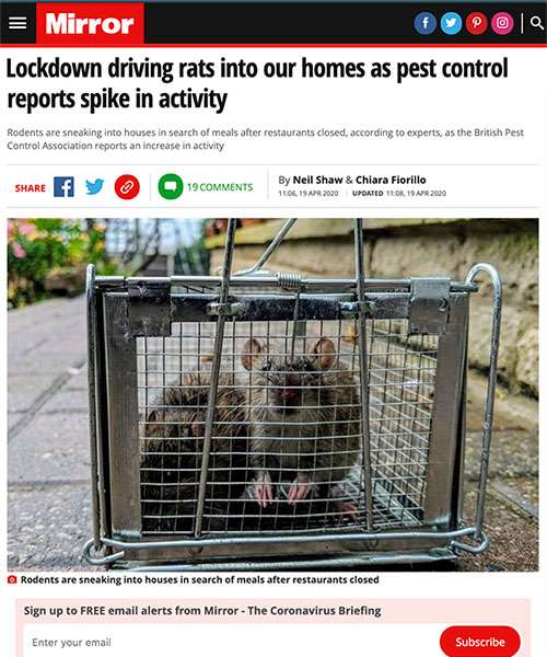 Lockdown driving rats into our homes as pest control reports spike in activity