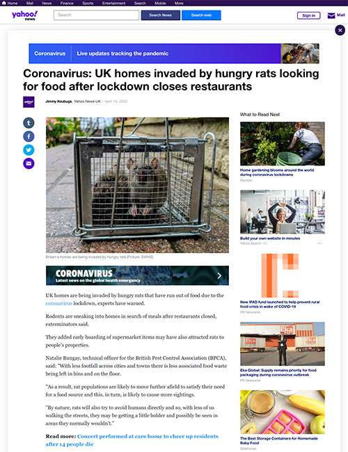 Coronavirus: UK homes invaded by hungry rats